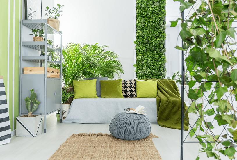 Conheça as melhores plantas para ambientes internos