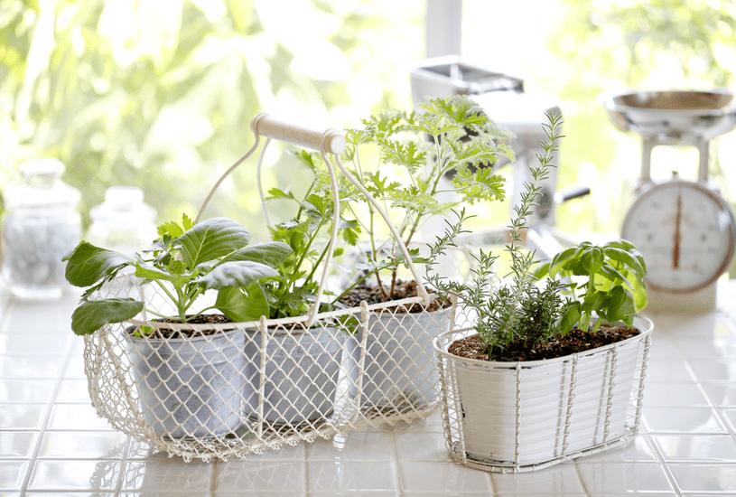 Tenha uma hortinha de plantas medicinais em casa