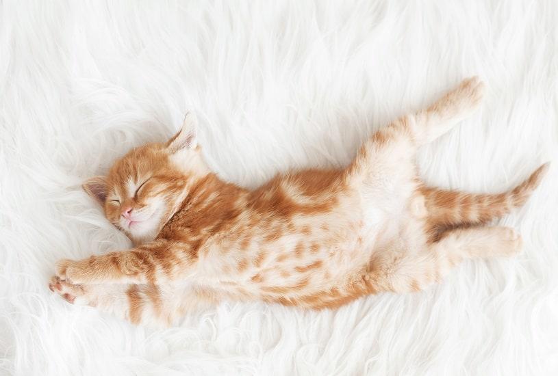 10 alimentos que ajudam a dormir