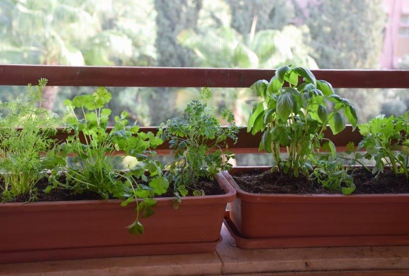 horta em casa: a planta ideal